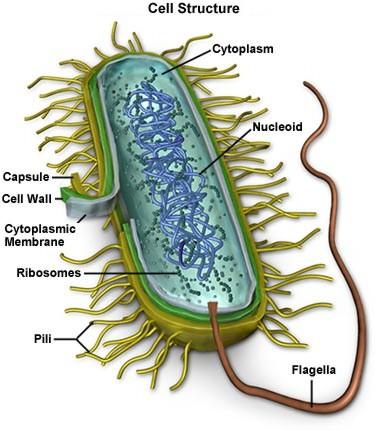 mycoplasma.jpeg