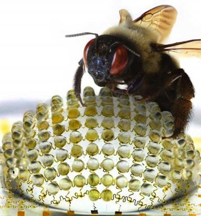 Bug-Eye-Lens.jpg